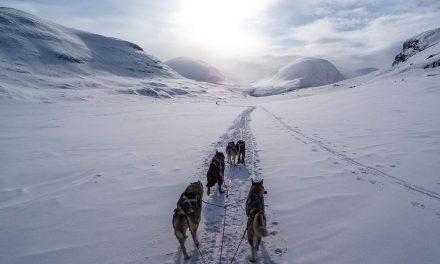 La Grande Odyssée Savoie-Mont-Blanc : la course qui a du chien