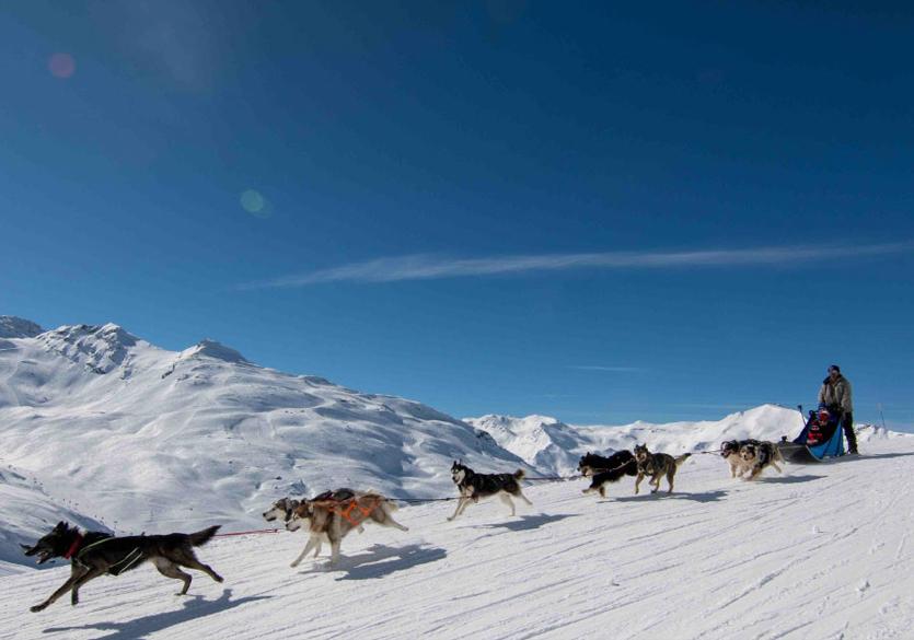 Station des 3 Vallées : Toutes les activités au contact des animaux